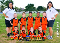 NYS Tigers S'14